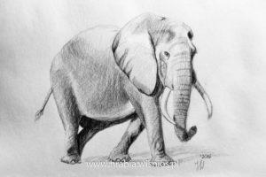 rysunek-safari-ołówek1