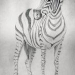 Zebra – rysunek ołówkiem
